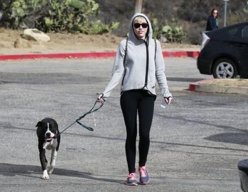 Miley Dog Walk