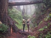 @taylorswift13: This forest situation. @karliekloss