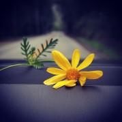 @karliekloss: best. road trip. ever.